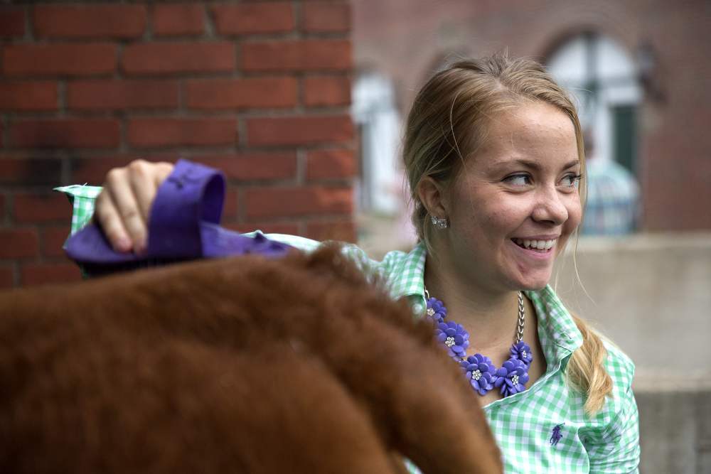 Taylor Donelson, 19, of McClean County, brushes Scotty, her Land of Lincoln grand champion steer, after Gov. Bruce Rauner purchased the animal for $61,000 at  the annual Sale of Champions at the Illinois State Fair Tuesday, August 18, 2015 in Springfield. (Erin Hooley/Chicago Tribune)