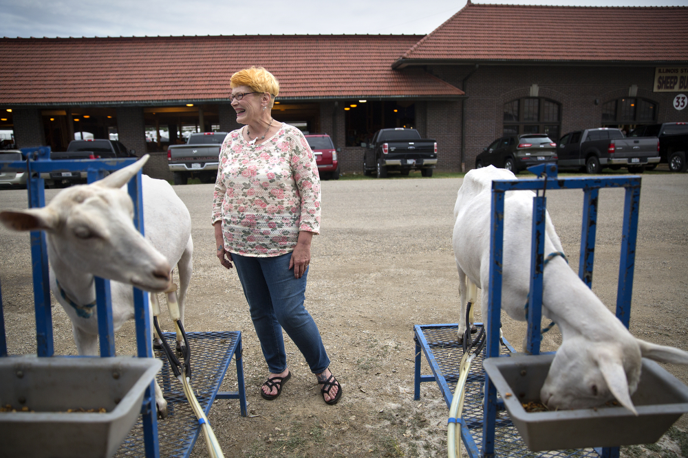 Penny Oldfather of Fairbury waits as two of her 14 goats get milked by an automatic goat-milking machine at the Illinois State Fair Wednesday, August 19, 2015 in Springfield. She and her husband Mark purchased the machine so they don't have to milk their goats by hand twice a day. (Erin Hooley/Chicago Tribune)