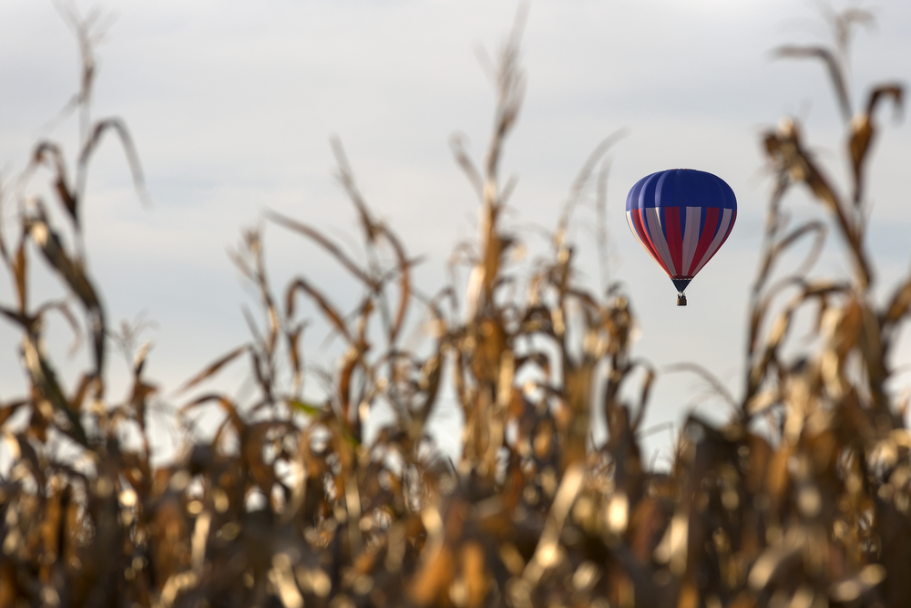 A hot air balloon floats over a cornfield Wednesday, Sept. 23, 2015 in in Minooka, Ill. (Erin Hooley/Chicago Tribune)
