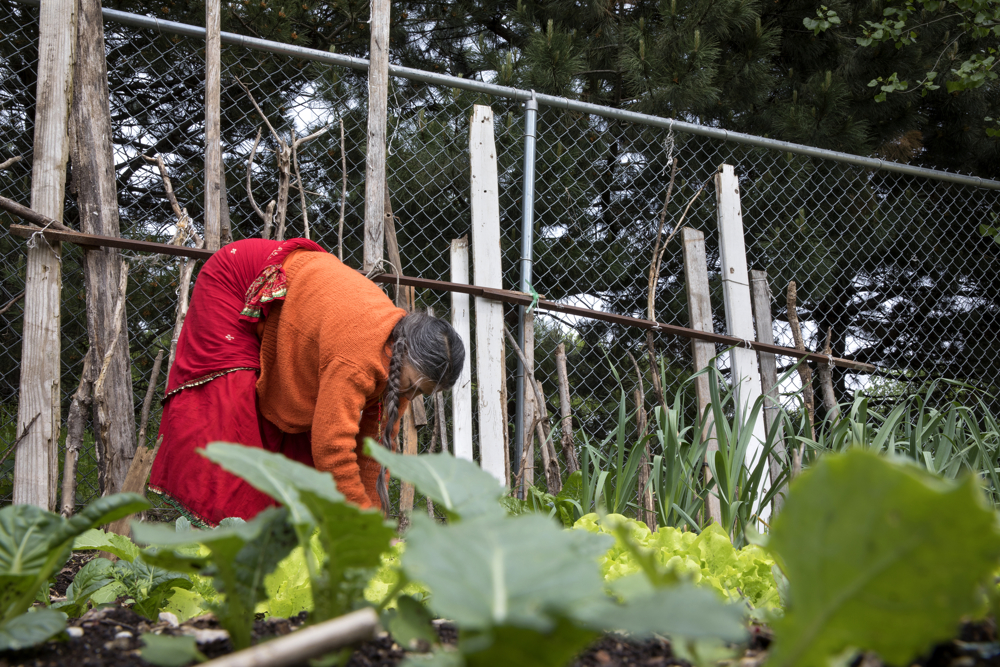 Renuka Pokhrel of Bhutan works in her family's garden plot in the Global Garden Refugee Training Farm Wednesday, May 24, 2017, in the Albany Park neighborhood of Chicago. About 100 families, including refugees from Bhutan, Myanmar and elsewhere, have plots in the community garden. (Erin Hooley/Chicago Tribune)
