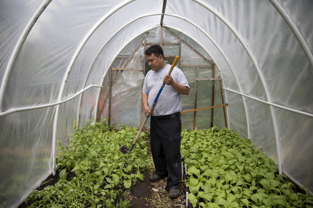 Pak Suan of Myanmar works in his small greenhouse in the Global Garden Refugee Training Farm Wednesday, May 24, 2017, in the Albany Park neighborhood of Chicago. About 100 families, including refugees from Bhutan, Myanmar and elsewhere, have plots in the community garden. (Erin Hooley/Chicago Tribune)