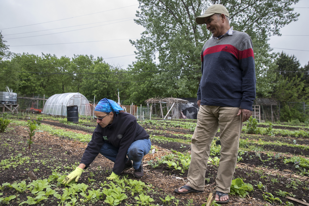 Director Linda Seyler, left, and Krishna Bhattarai look at young plants in his plot in the Global Garden Refugee Training Farm Friday, May 19, 2017, in the Albany Park neighborhood of Chicago. About 100 families, including refugees from Bhutan, Myanmar and elsewhere, have plots in the community garden. (Erin Hooley/Chicago Tribune)