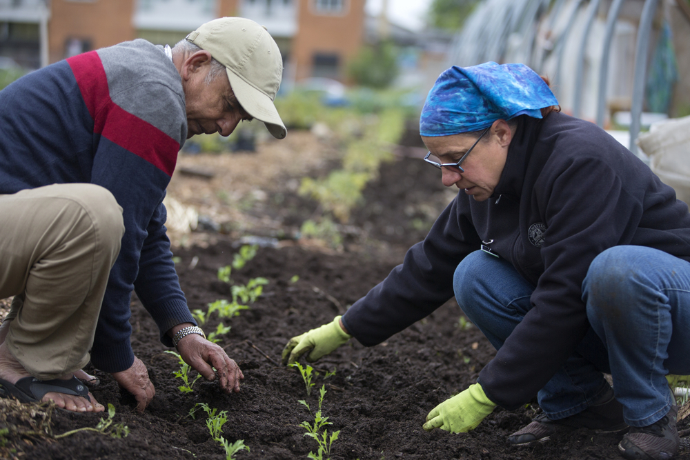 Director Linda Seyler, right, plants small seedlings with Krishna Bhattarai of Bhutan in the Global Garden Refugee Training Farm Friday, May 19, 2017, in the Albany Park neighborhood of Chicago. About 100 families, including refugees from Bhutan, Myanmar and elsewhere, have plots in the community garden. (Erin Hooley/Chicago Tribune)