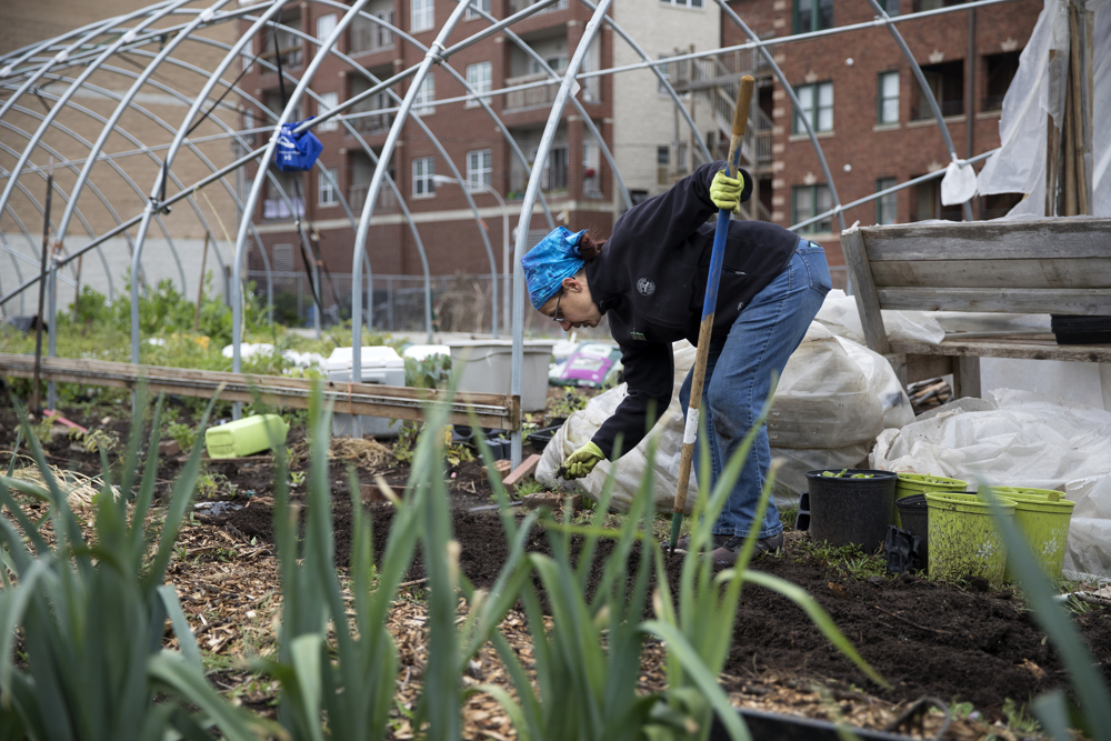 Director Linda Seyler works in the Global Garden Refugee Training Farm Friday, May 19, 2017, in the Albany Park neighborhood of Chicago. About 100 families, including refugees from Bhutan, Myanmar and elsewhere, have plots in the community garden. (Erin Hooley/Chicago Tribune)