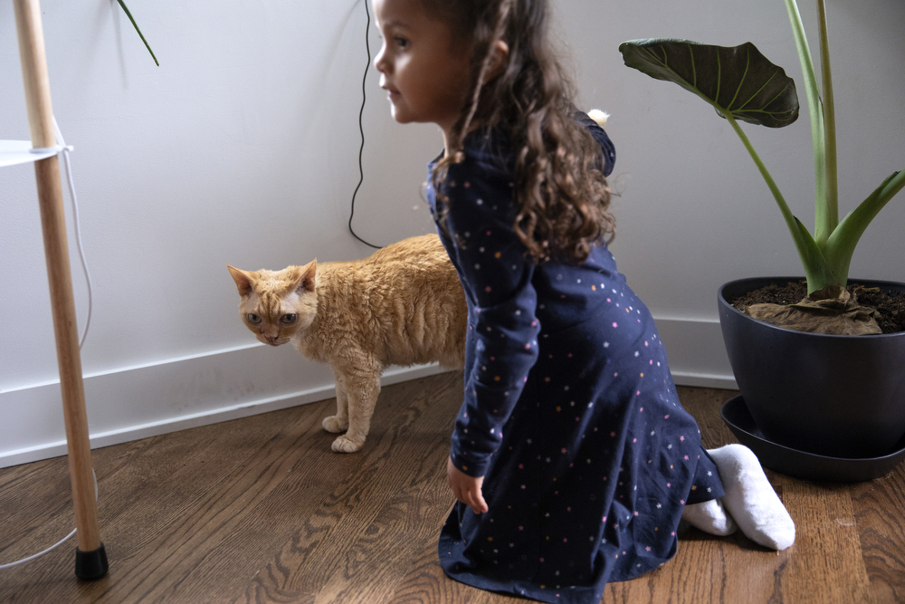 Perla Flores Delgado, 3, plays with a cat at the home of the DeMay-Gres family, who is sponsoring her family as they seek asylum status in the United States, Sunday, May 20, 2018, in Chicago. The family left their home country of El Salvador years ago due to gang violence, living in Guatemala for awhile before ending up in Mexico. They crossed the border into the United States as part of a caravan of hundreds of people, organized by Pueblo Sin Frontreras, where they surrendered and sought asylum. Pueblo Sin Frontreras worked with Showing Up for Racial Justice, a national network of activists, to find sponsor families to house those in the caravan who did not have relatives in the United States. (Erin Hooley/Chicago Tribune)