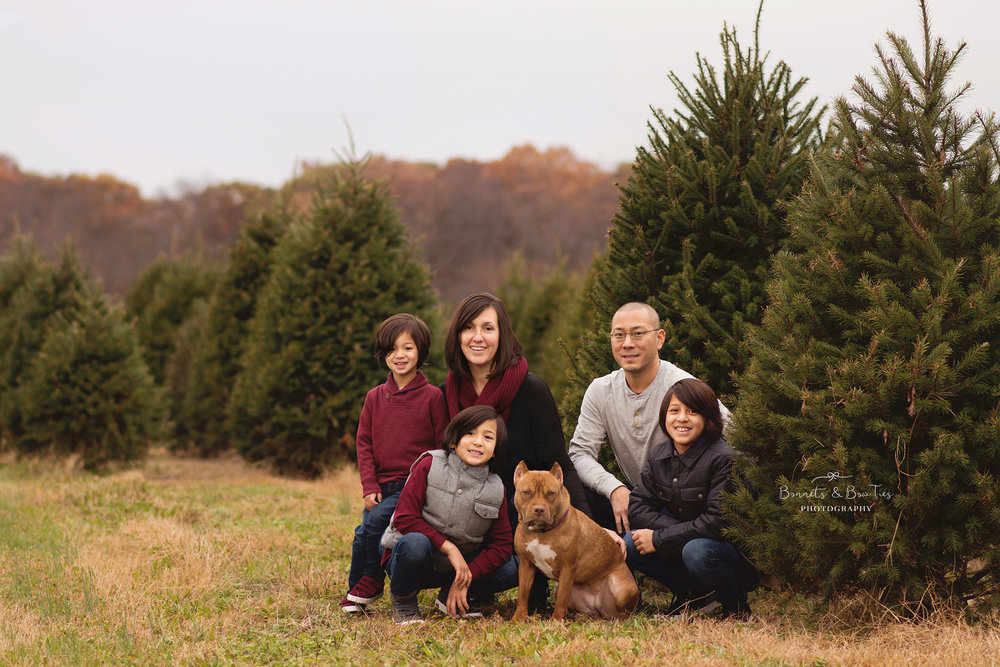 christmas tree farm york pa.jpg