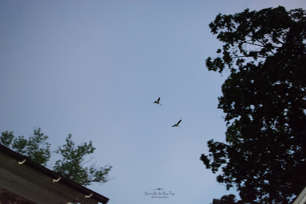 two geese flying in the sky.jpg