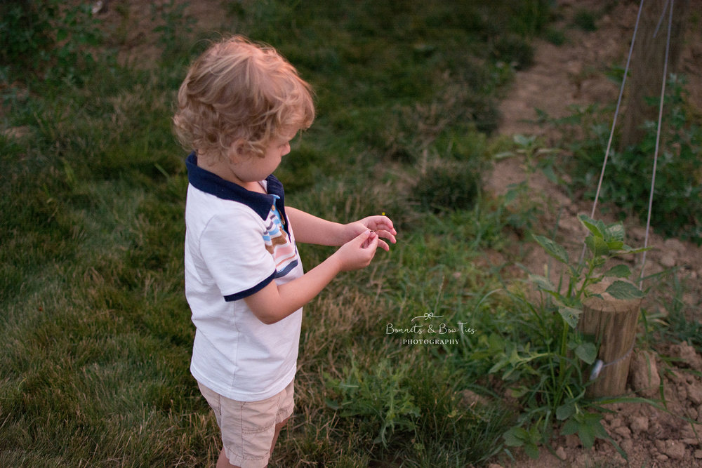 boy catching lightning bugs.jpg