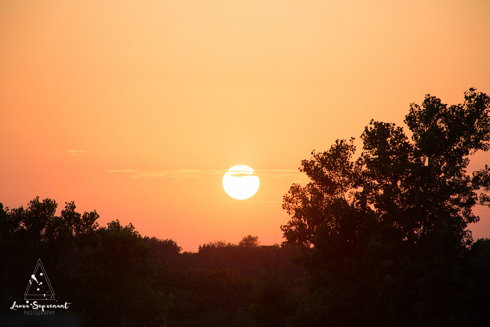 Hancock County Country Illinois Nature Outdoor Sunset Cow Cattle Cows Cat Sunflare Photography-6035.jpg