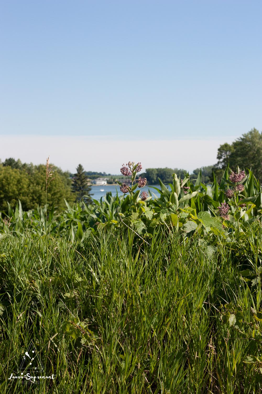 July 4 Wisconsin-0299.jpg