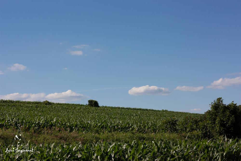 July 4 Wisconsin-0349.jpg