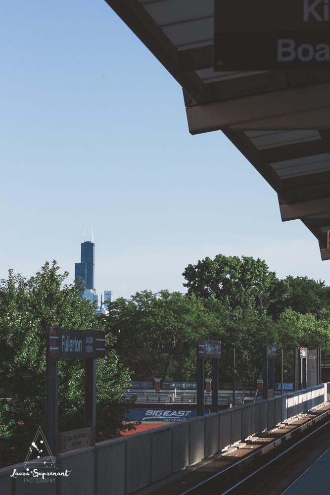 chicago_summer_flowers-2.jpg