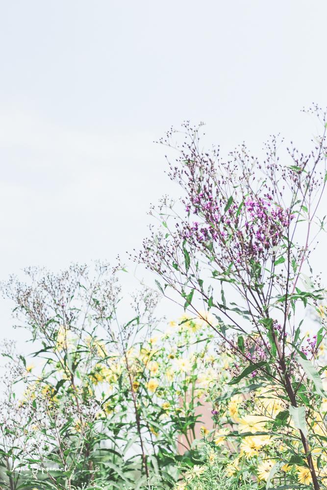 chicago_summer_flowers-7.jpg