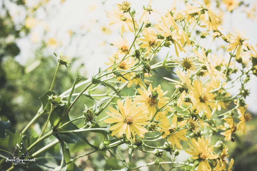 chicago_summer_flowers-8.jpg