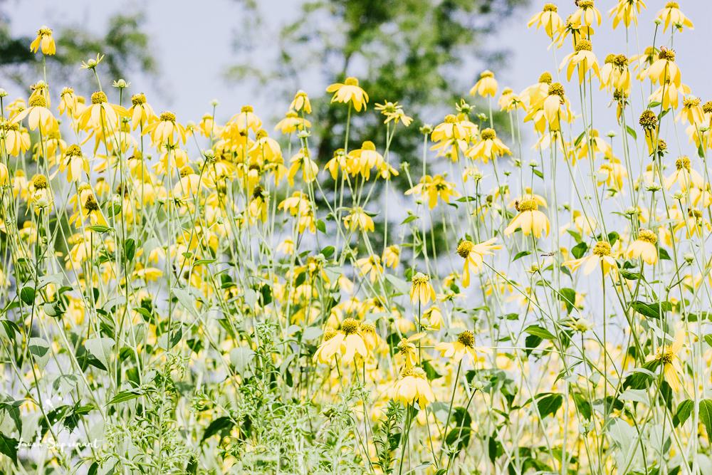 chicago_summer_flowers-9.jpg