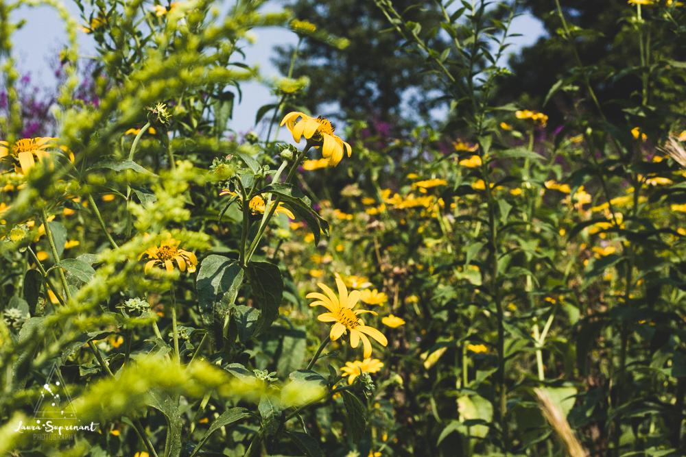 chicago_summer_flowers-13.jpg