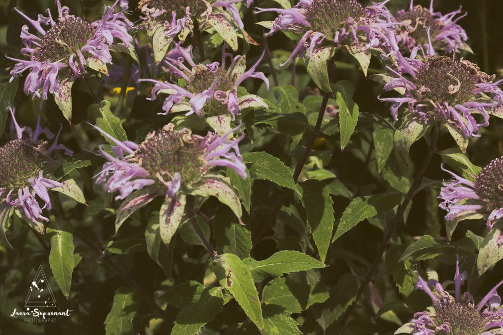 chicago_summer_flowers-14.jpg