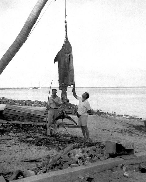Stephen J. McConnell - Ernest Hemingway Photo/Fishing/Marlin. Hemingway Referenced/ In Search of You.