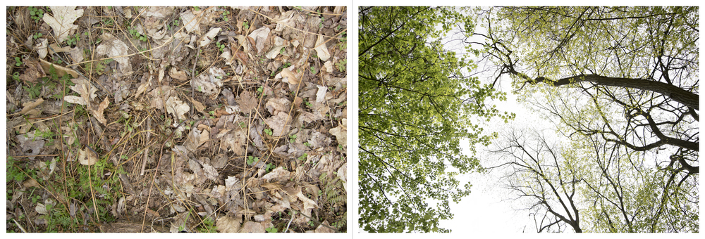 "And so on and so forth in much the same vein: Ferns, Inkjet Photograph, 24"" X 72,"" 2015."