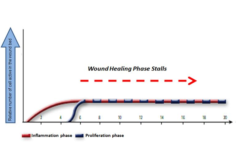In chronic wounds, the skin cells fail to leave the inflammation phase of the healing process and maintain a prolonged state of inflammation.  This leads to wounds that will not close and are vulnerable to infection. The longer the wound remains in the inflammation phase, the greater the tissue damage and necrosis.  Consequently, the wound requires additional de-bridement and a wound that becomes progressively larger in size and depth.     There are a variety of products on the market today that target one at most two phases of the healing process.