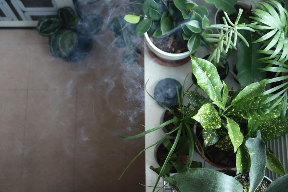 様々な植物が窓辺に暮らしています。植物をケアしながらお香を焚くと更に癒し効果が得られます(ロン毛調べによる)。