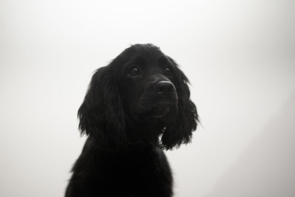 ロン毛と坊主とニューヨーク 犬 シェルター アダプト 引き取り