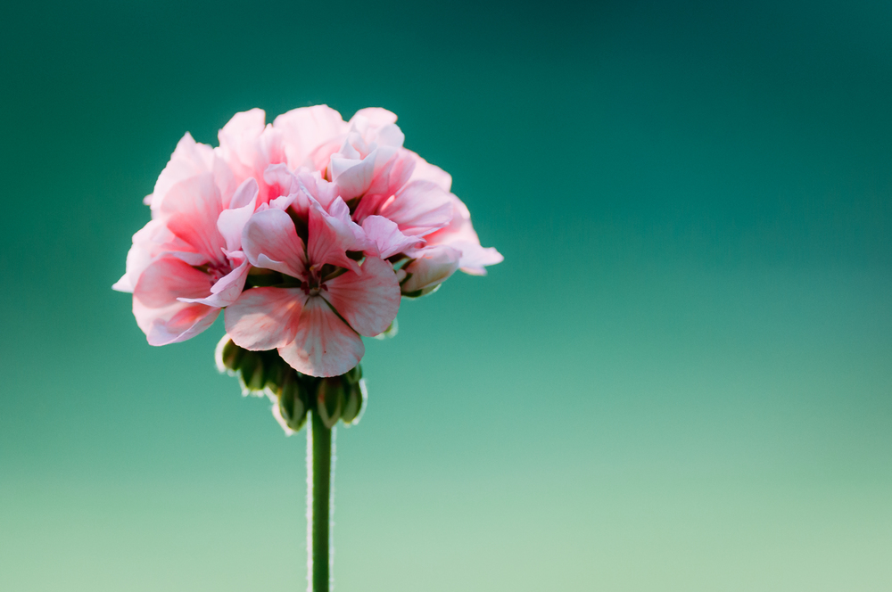 floral essence, 2014.