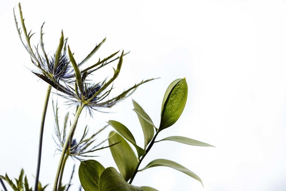 fall-fillers-as-florals-mozart-shiplap-1-3.jpg