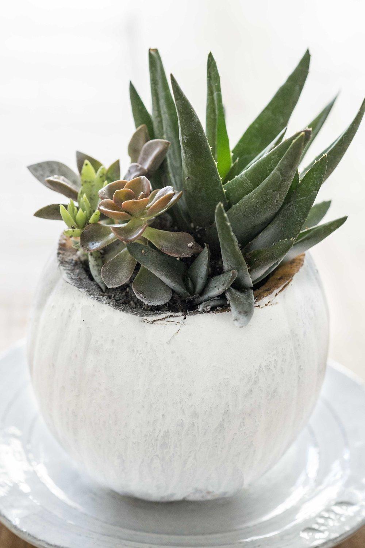 DIY White Painted Succulent Pumpkin-5.jpg