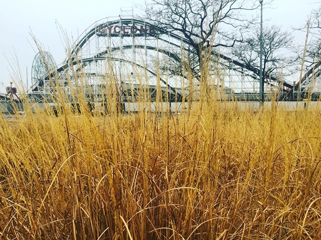 The New York Aquarium doing winter grasses right 🌾🌾🌾 . . . #nyaquarium #flashesofdelight #pretty #landscape #cyclone #coneyisland #brooklyn #grasses #embark