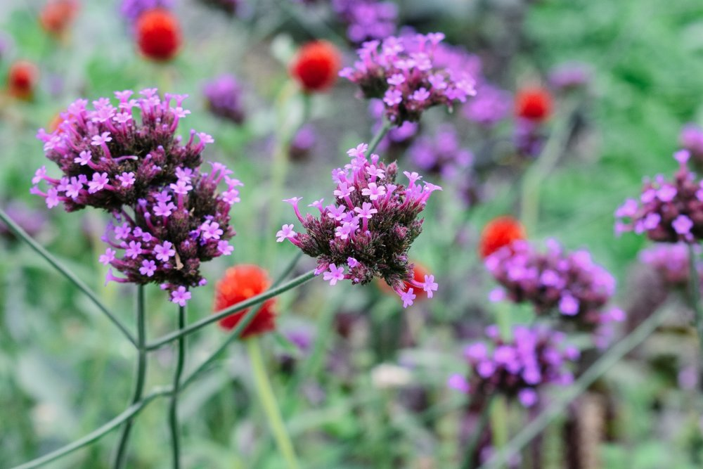 Stone Barns flora