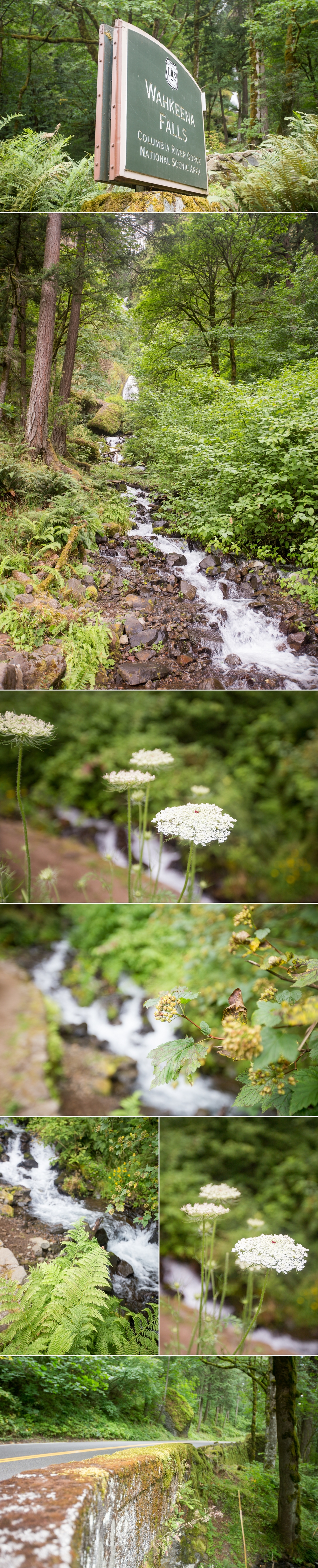 Columbia River Gorge | Portland, Oregon | Shaina Lee Photography | Fairfield County CT, NYC + Destination Wedding + Engagement Photographer