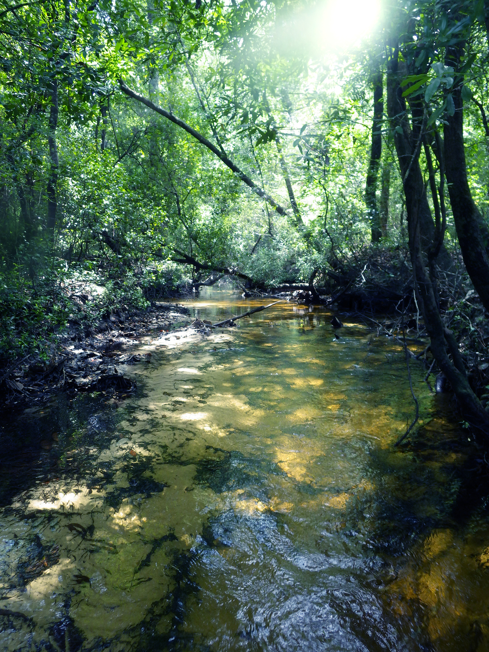 Moccasin Creek, FL (click to enlarge)