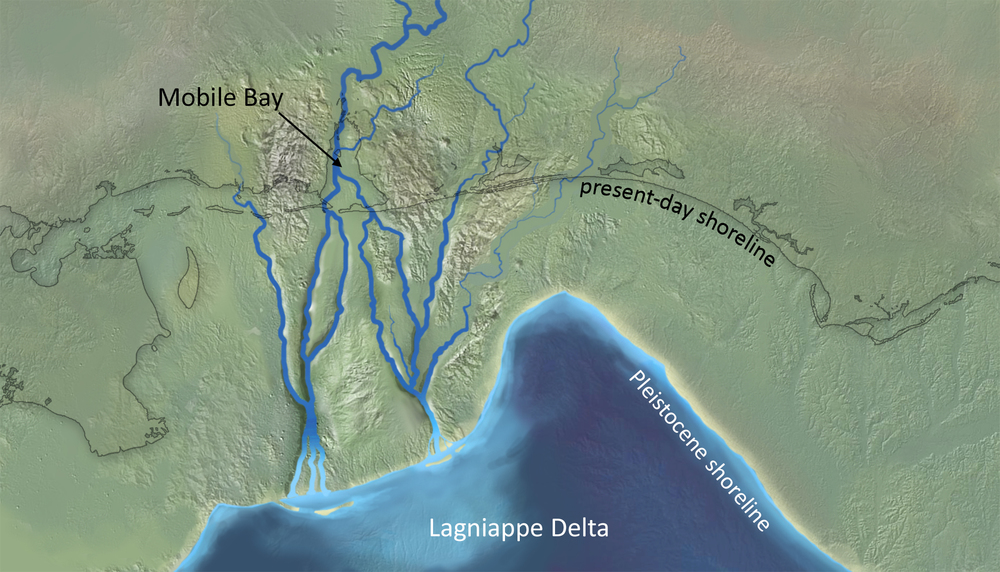 My interpretation, based on published literature (seismic surveys and pollen analyses), of what the Gulf Coast may have looked like during the last glacial maximum.