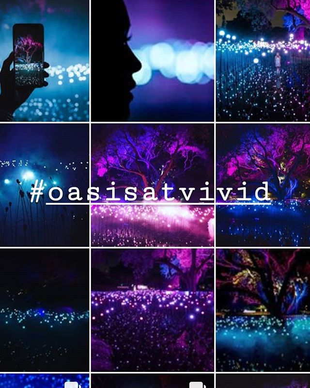 Next compile of the #oasisatvivid photos/videos! Love seeing and reading all your experiences! Thank you! #vividgarden