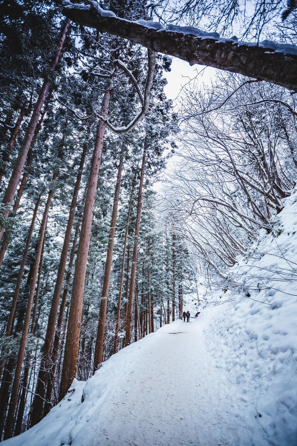 Snow Monkey Park: Nagano in Winter_Japan Photography_James Feng Design_Sydney Freelance Designer