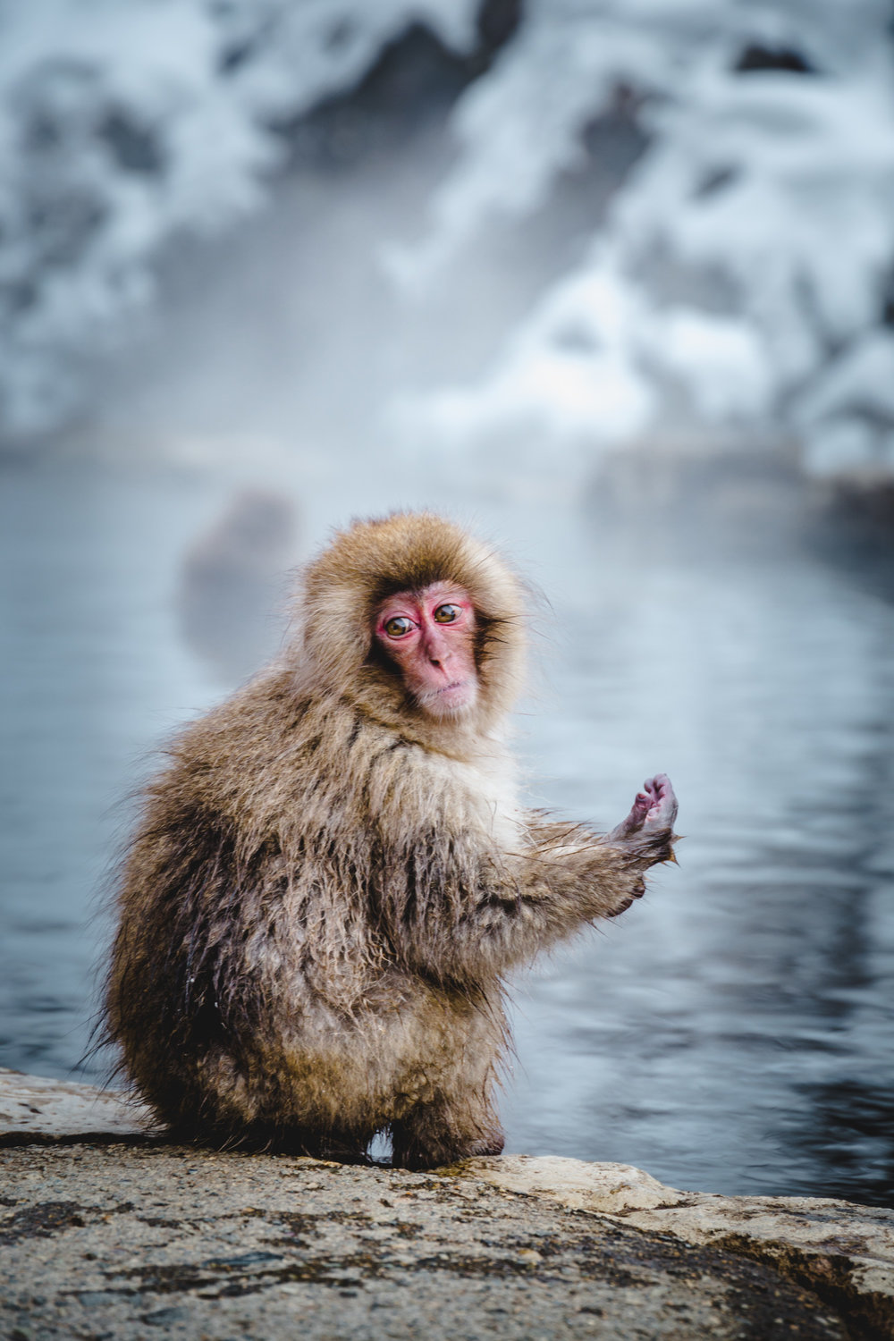 Snow Monkey Park: Nagano in Winter