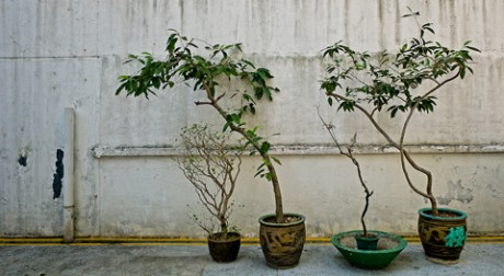So Uk Bonsai Trees