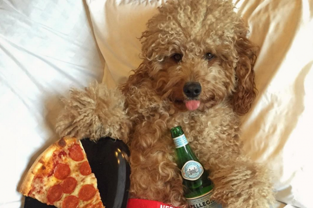Dog holding pizza