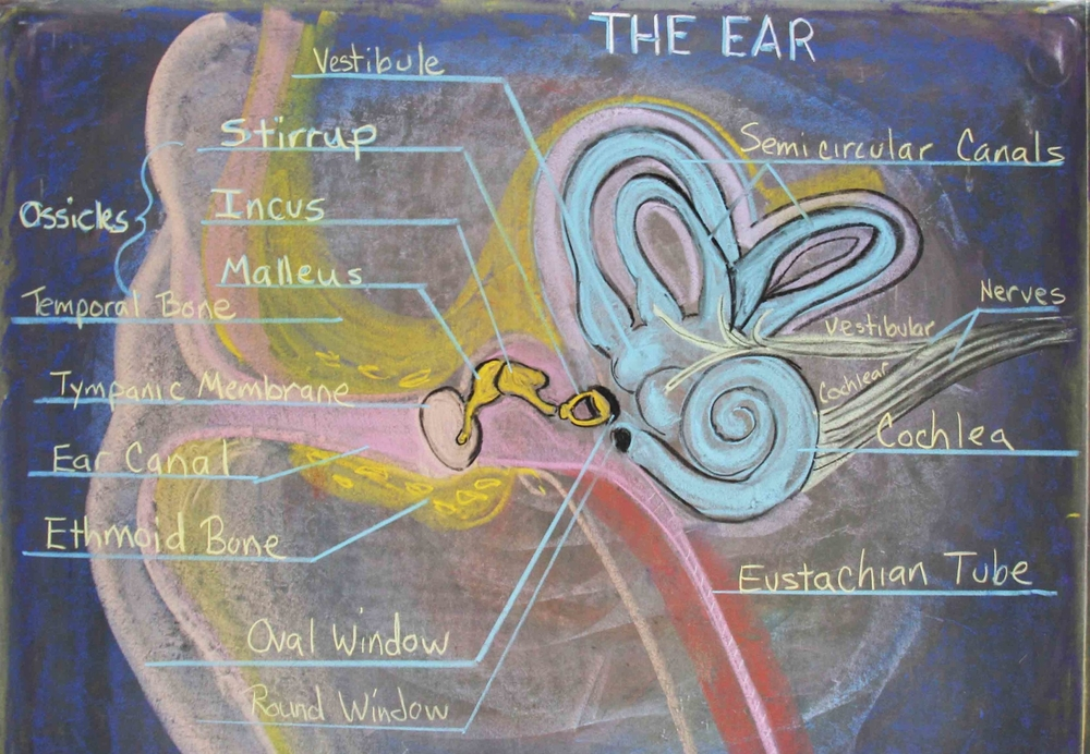 Physiology of the ear, eighth grade chalkboard