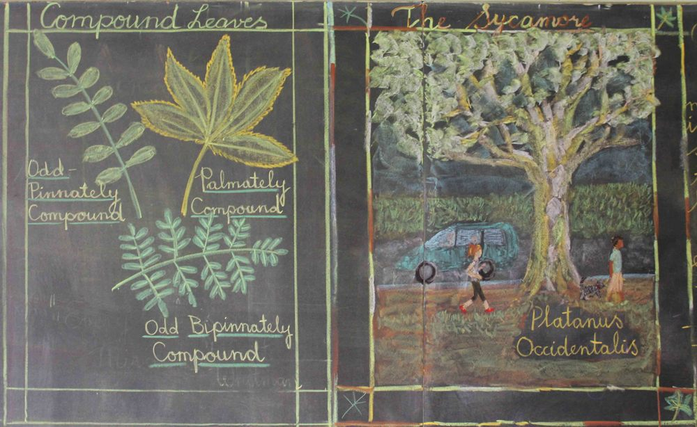 Intricate chalkboard drawings bring complex subjects to life in every grade.