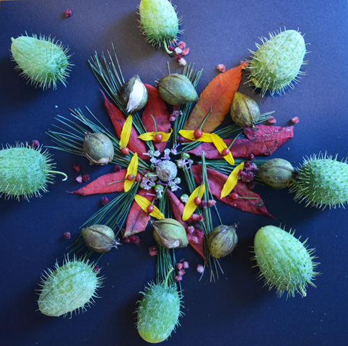 An interdisciplinary lesson in fifth grade combines the study of botany with the artistic creation of mandalas, part of the world cultures curriculum.