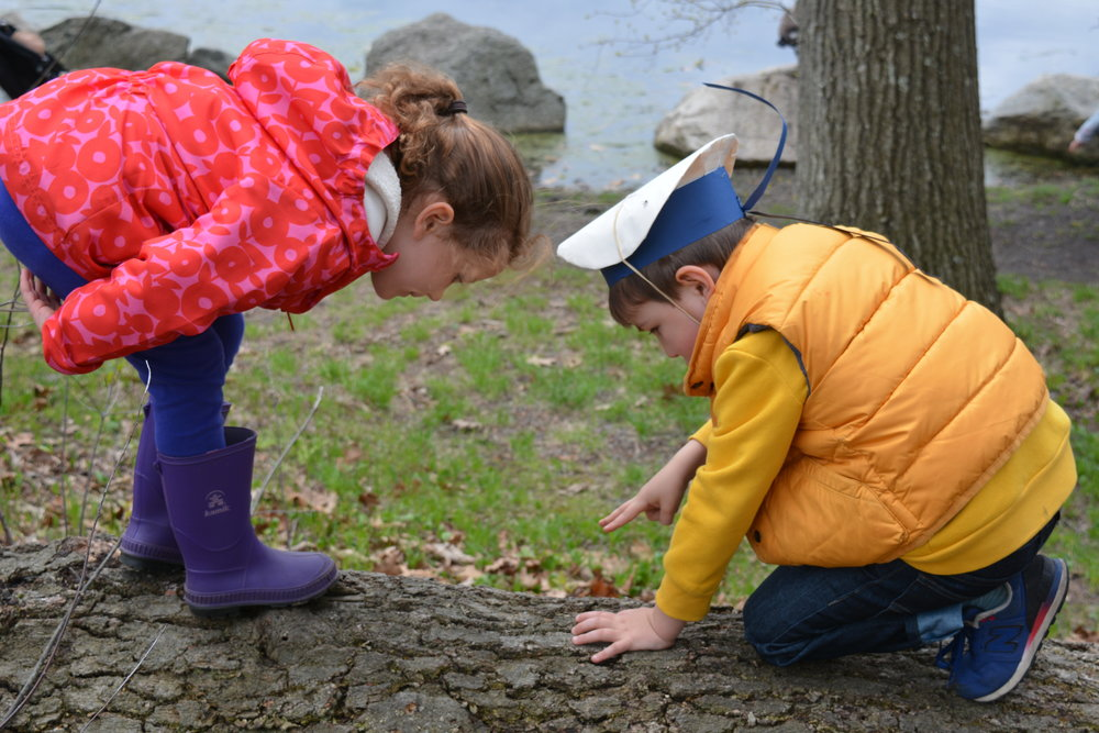We know that self-directed free play, outdoor exploration, and caring relationships with experienced teachers translate into healthy cognitive development and confidence in grades 1–8. Waldorf leads the way in providing a healthy foundation for future learning.