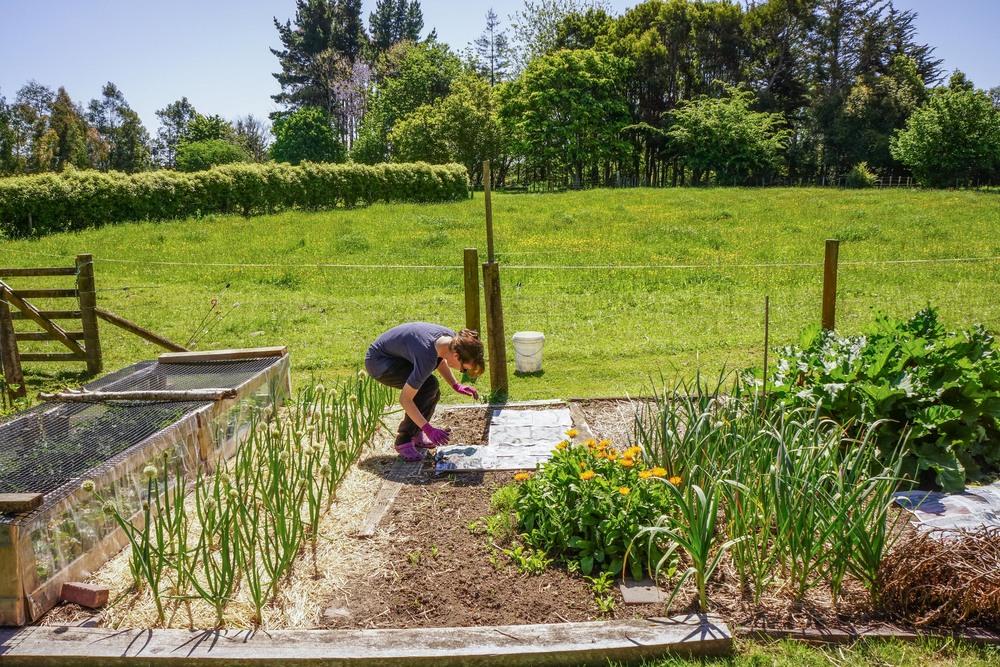 French WWOOFer named Elodie gardening.