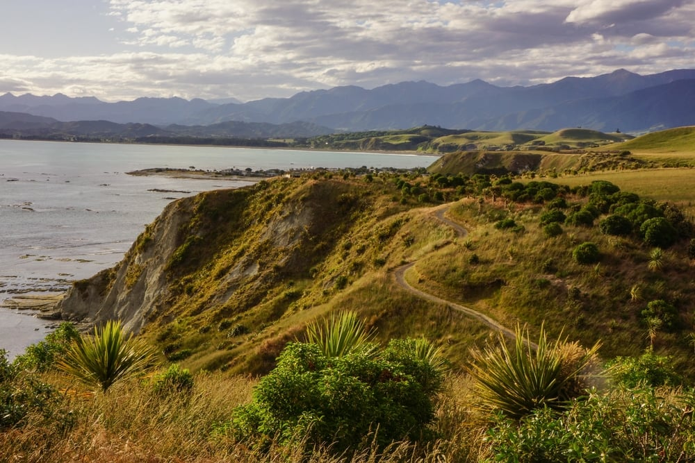 Kaikoura is known for it's marine life (think whales and dolphins) but if you're on a budget, a walk around the peninsula will introduce you to some local seal colonies and will give you this view.