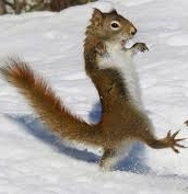 Squirrel at a wedding when Dancing Queen comes on
