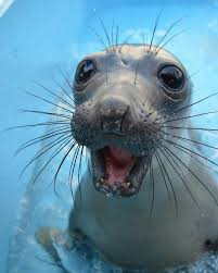 This level of excitement gets my seal of approval.  See what I did there?