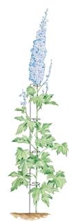 blue flower support.jpg