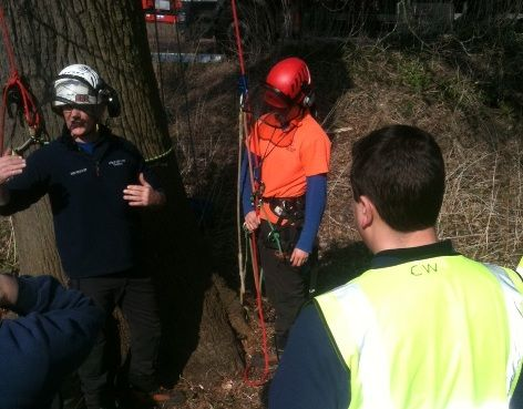 Training tree surgeons