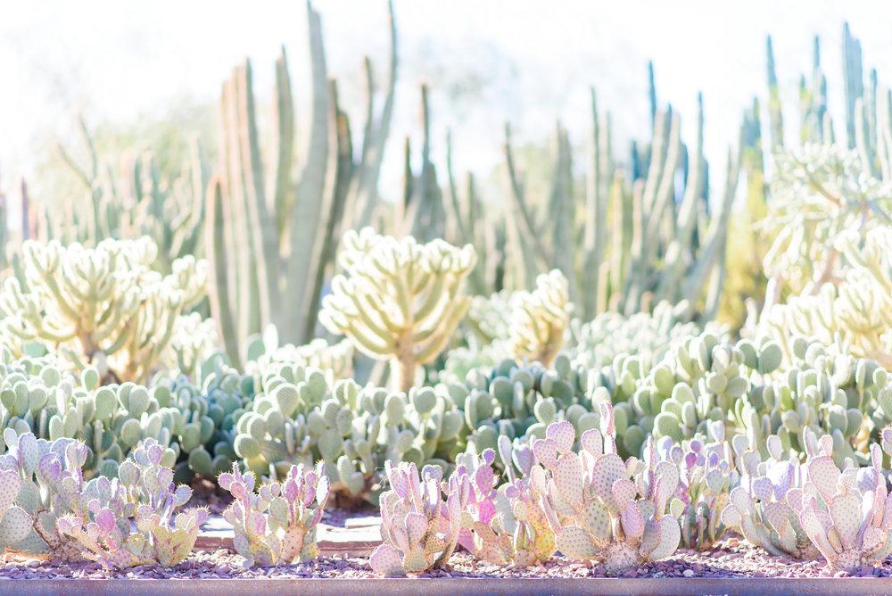 entrance to the desert botanical garden by kentucky photographer january june photography